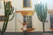 Cactus Huacachina Peru